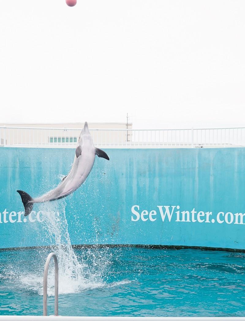 Dolphin Tale 2 Weekend-12