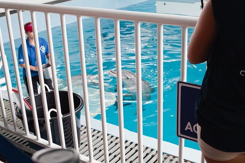 Dolphin Tale 2 Weekend-3