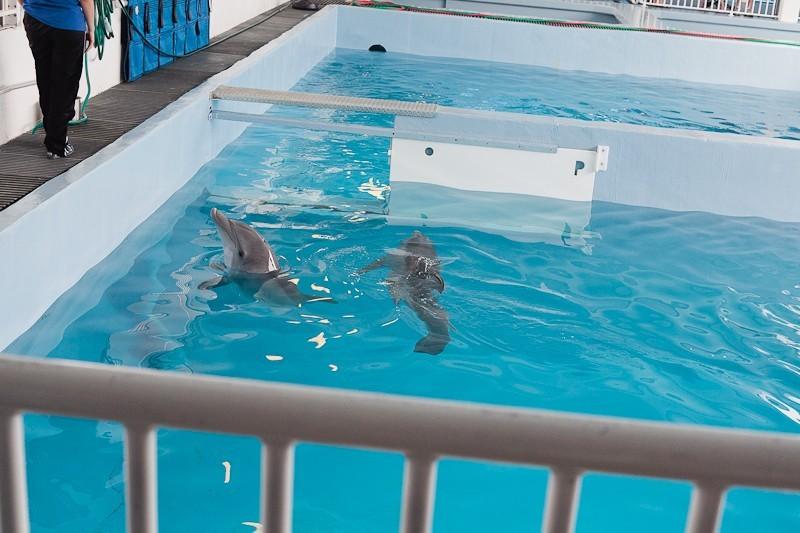 Dolphin Tale 2 Weekend-4