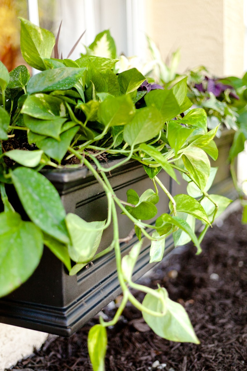 5 Tips for the Perfect DIY Window Box to instantly update your home and curb appeal! Flower window box basics and how to fill a thriving window planter.