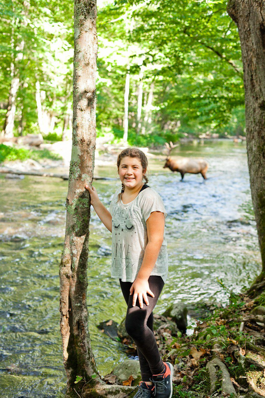 A Quick Maggie Valley Travel Guide for your Next Smoky Mountains Vacation featured by top Florida travel, life and style blog, Fresh Mommy Blog: elk sightings