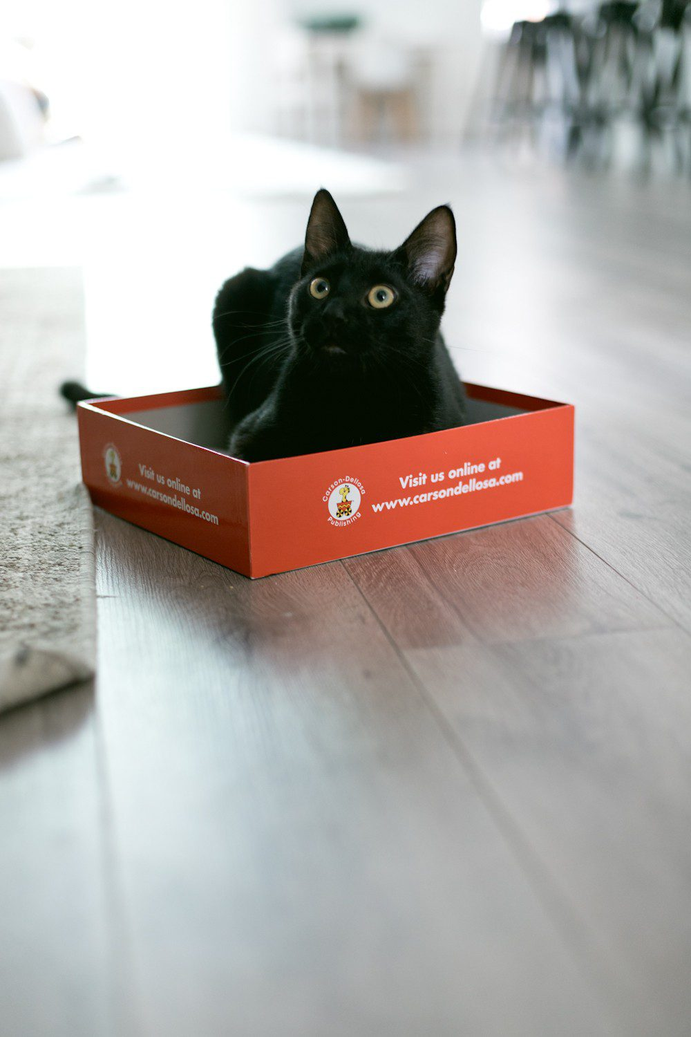 5 Essential Things for the Best Kitten Care from top US lifestyle blogger Tabitha Blue of Fresh Mommy Blog! I hate cat litter! Here's why the Litter Robot is amazing and our new kitten care best friend.   How to Train Your Cat to Use the Litter Box by popular Tampa life and style blog, Fresh Mommy: image of a black cat sitting in a box.