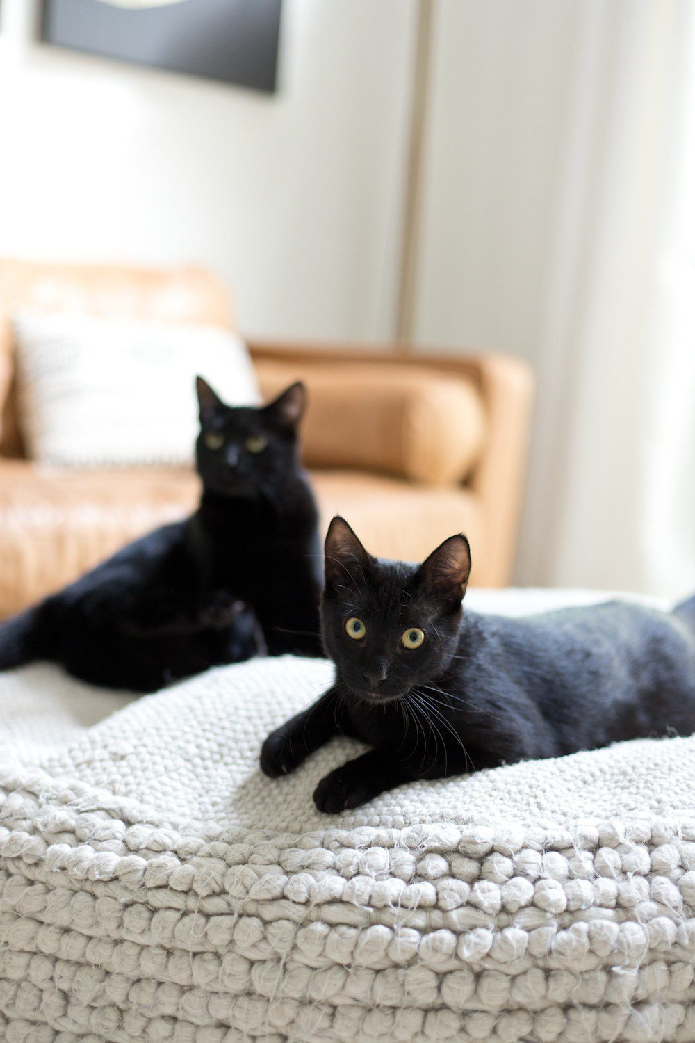 5 Essential Things for the Best Kitten Care! I hate cat litter! Here's why the Litter Robot is amazing and our new kitten care best friend. | How to Train Your Cat to Use the Litter Box by popular Tampa life and style blog, Fresh Mommy: image of two black cats lounging on an ottoman.
