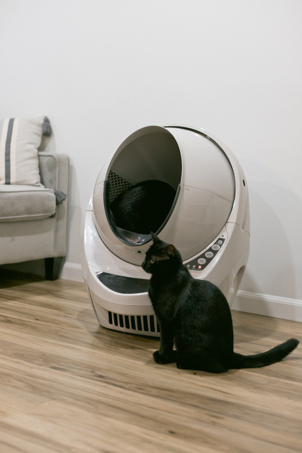 Kitten Care Tips: 5 Essentials you Need to Raise a Cat by popular lifestyel blogger Tabitha Blue of Fresh Mommy Blog: image of black cat sitting in front of a Litter Robot litter box.
