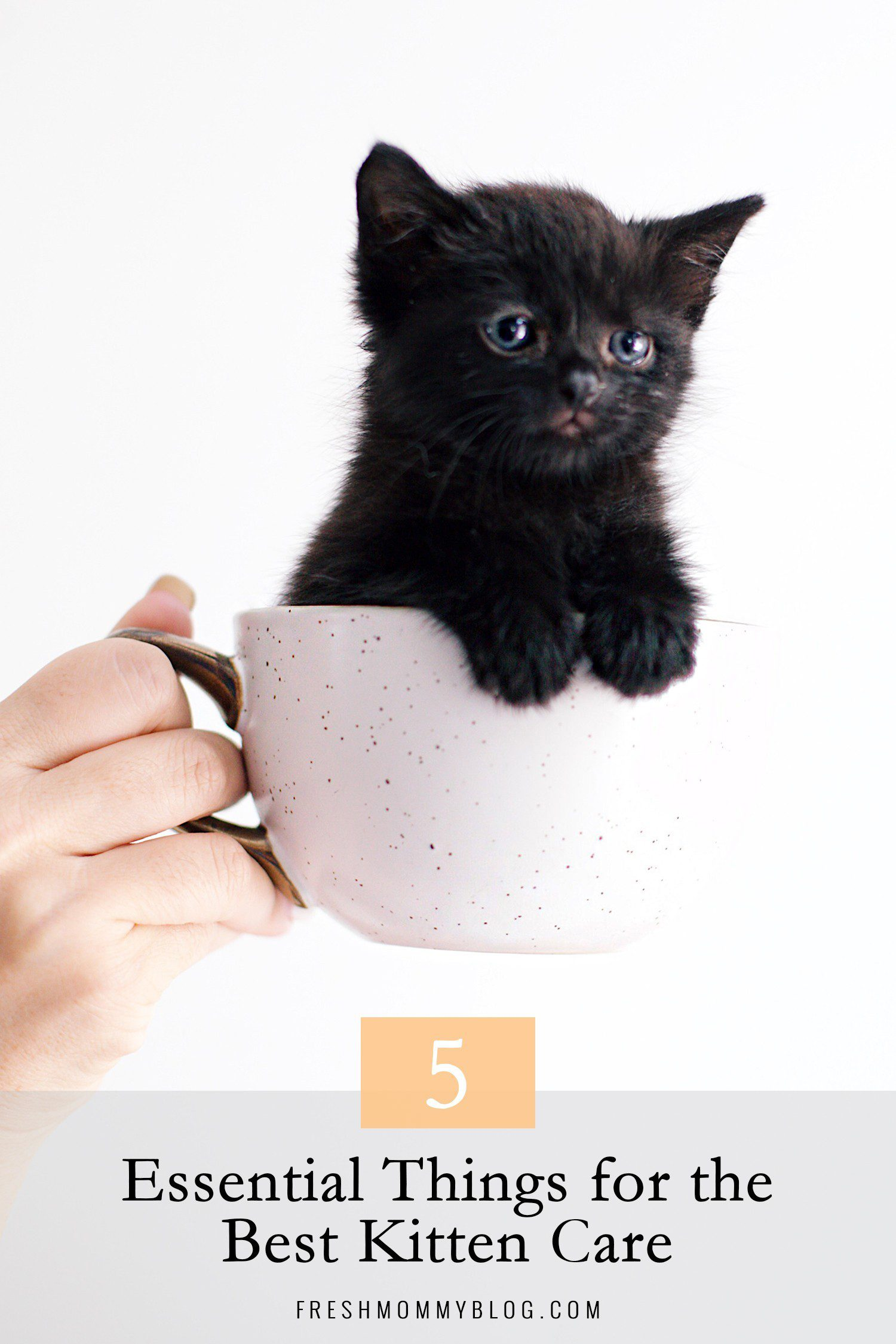 5 Essential Things for the Best Kitten Care