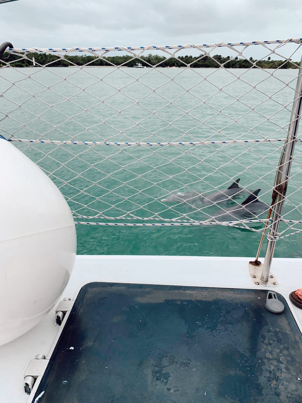 Relaxing catamaran trip with Sweet Liberty, the largest Sailing Catamaran in Southwest Florida. Dolphin sight seeing! | Spectacular Things to Do in Naples FL This Weekend by popular Florida blog, Fresh Mommy Blog: image of three dolphins swimming in the ocean.