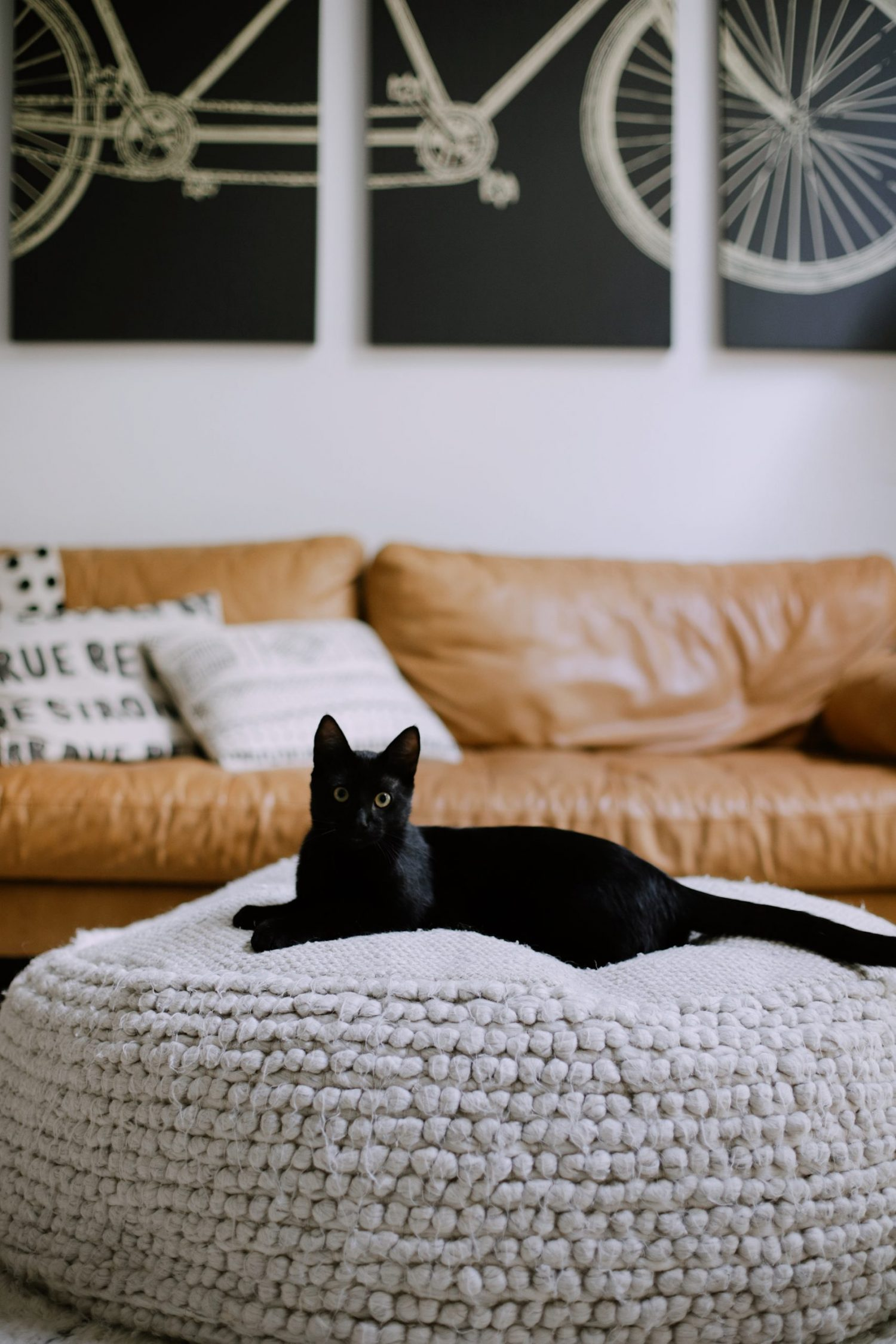 What You Don't Know About Cats and Newborns Living Together | Cats and Newborns by popular Florida motherhood blog, Fresh Mommy Blog:  image of a black cat sitting on a ottoman.