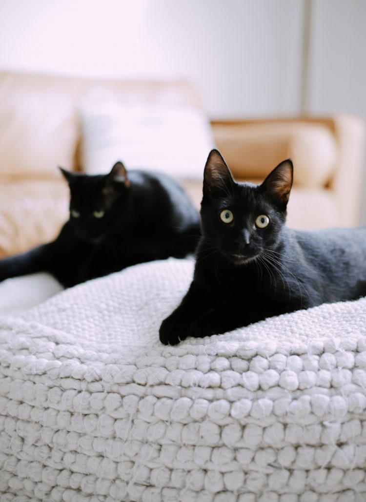 What You Don't Know About Cats and Newborns Living Together