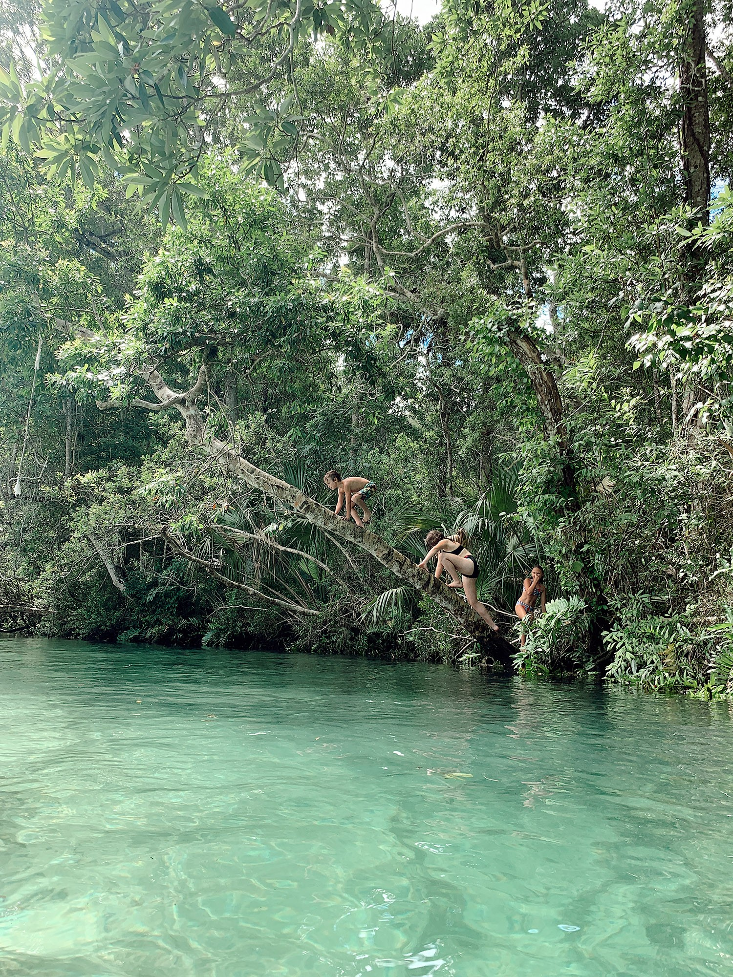 Tips for an Amazing Weeki Wachee Kayaking Florida Staycation. Visit Florida Travel ideas from top lifestyle blogger Tabitha Blue of Fresh Mommy Blog. | Weeki Wachee Kayaking by popular Florida blog, Fresh Mommy Blog: image of a group of kids climbing on a tree and playing in the water.