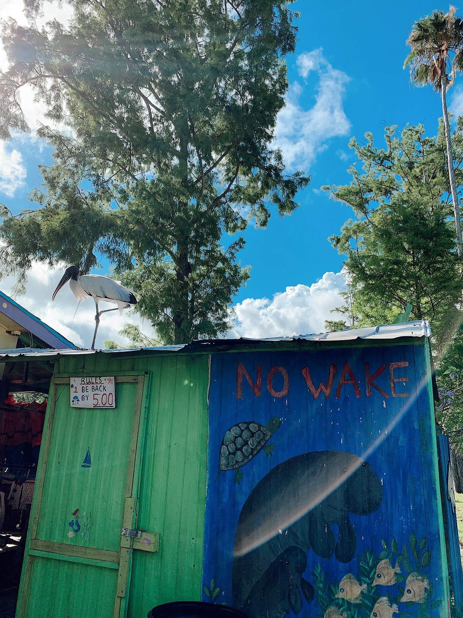 Tips for an Amazing Weeki Wachee Kayaking Florida Staycation. Visit Florida Travel ideas from top lifestyle blogger Tabitha Blue of Fresh Mommy Blog. | Weeki Wachee Kayaking by popular Florida blog, Fresh Mommy Blog: image of a metal shack with a manatee and sea turtle painted on it.