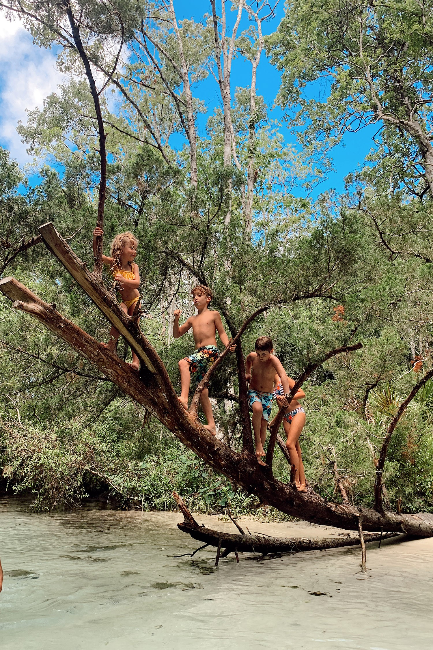 Tips for an Amazing Weeki Wachee Kayaking Florida Staycation. Visit Florida Travel ideas from top lifestyle blogger Tabitha Blue of Fresh Mommy Blog. | Weeki Wachee Kayaking by popular Florida blog, Fresh Mommy Blog: image of a group of kids climbing a tree.