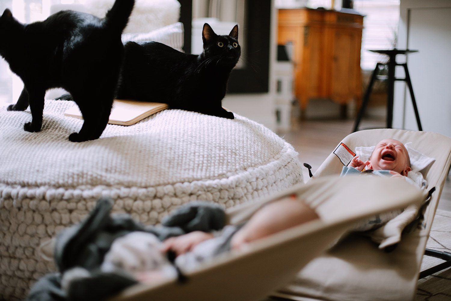 What You Don't Know About Cats and Newborns Living Together | Cats and Newborns by popular Florida motherhood blog, Fresh Mommy Blog:  image of two black cats next to two newborn twin babies.