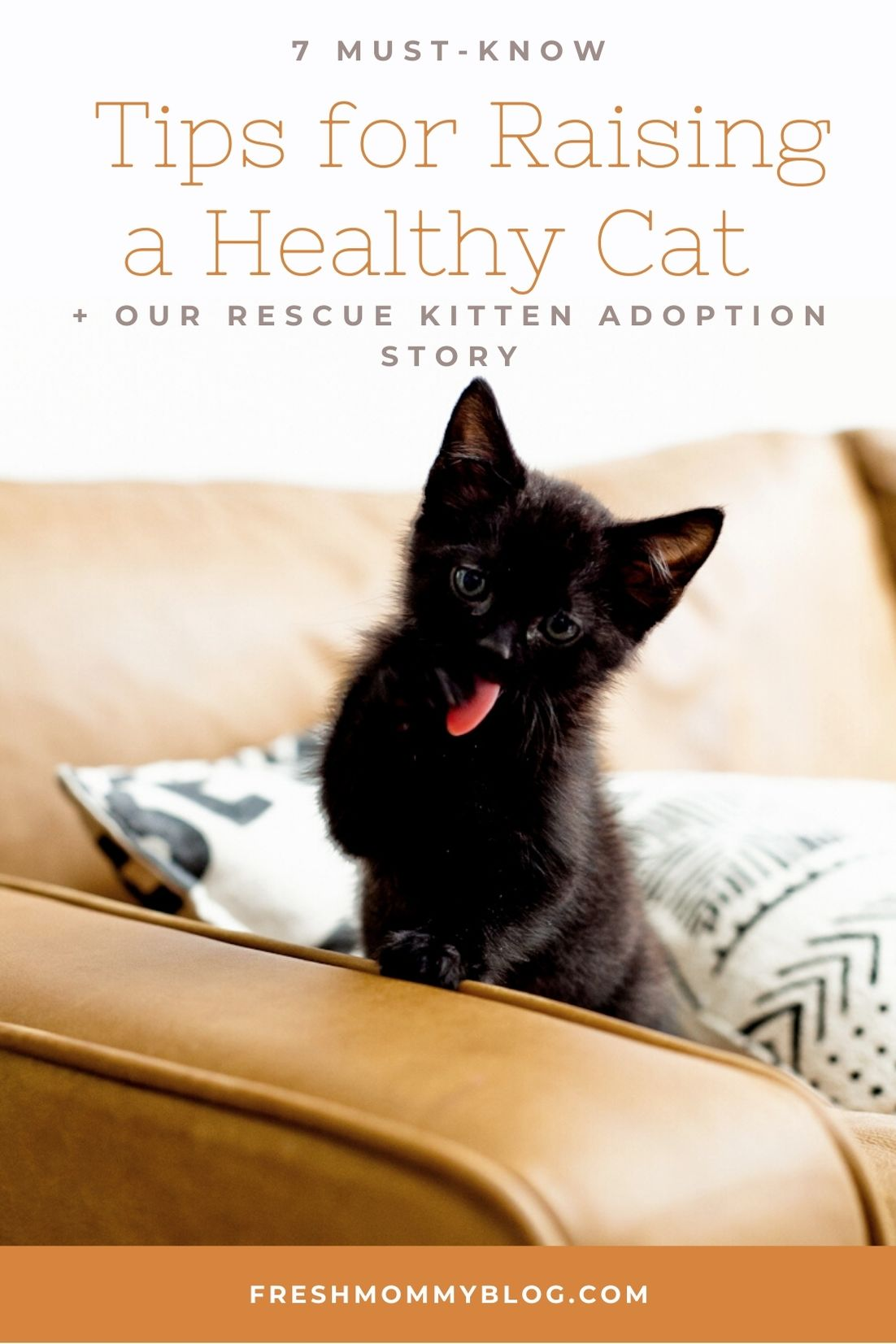 7 Must-Know Tips for Raising a Healthy Cat + Our Rescue Kitten Adoption Story | Solid Gold by popular Florida lifestyle blog, Fresh Mommy Blog: image of a black kitten on a couch.