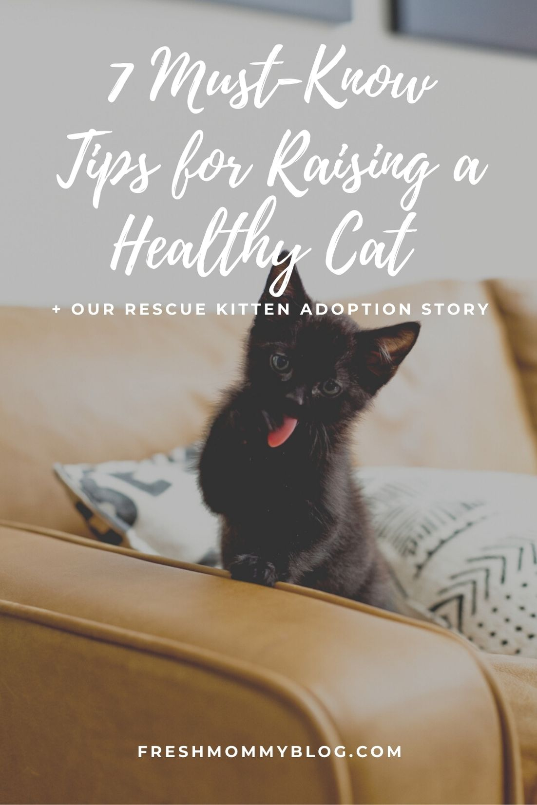 7 Must-Know Tips for Raising a Healthy Cat + Our Rescue Kitten Adoption Story | Solid Gold by popular Florida lifestyle blog, Fresh Mommy Blog: Pinterest image of a black cat on a couch.