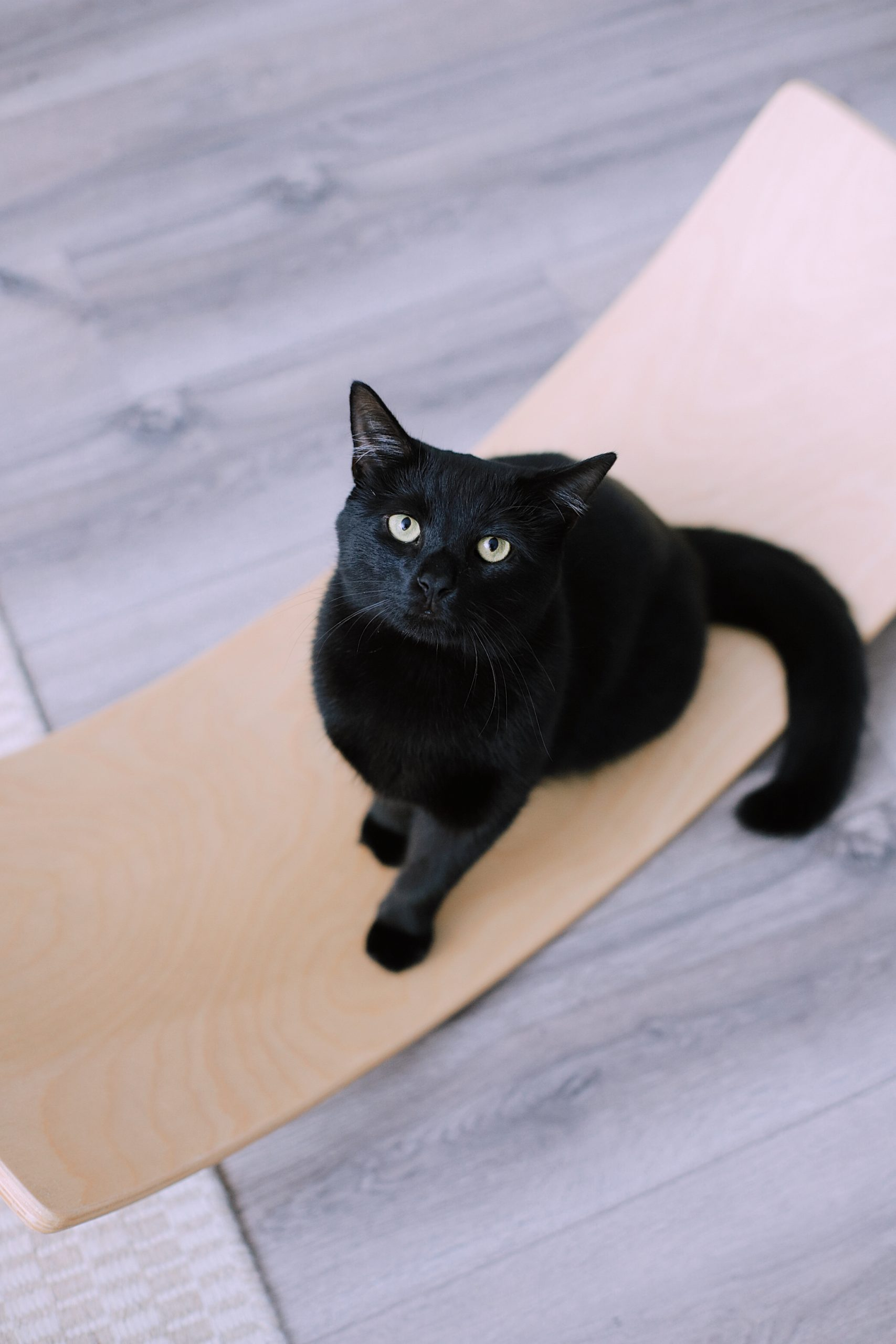 7 Spectacular Must-Know Tips for Raising a Healthy Cat | Solid Gold by popular Florida lifestyle blog, Fresh Mommy Blog: image of a black cat.