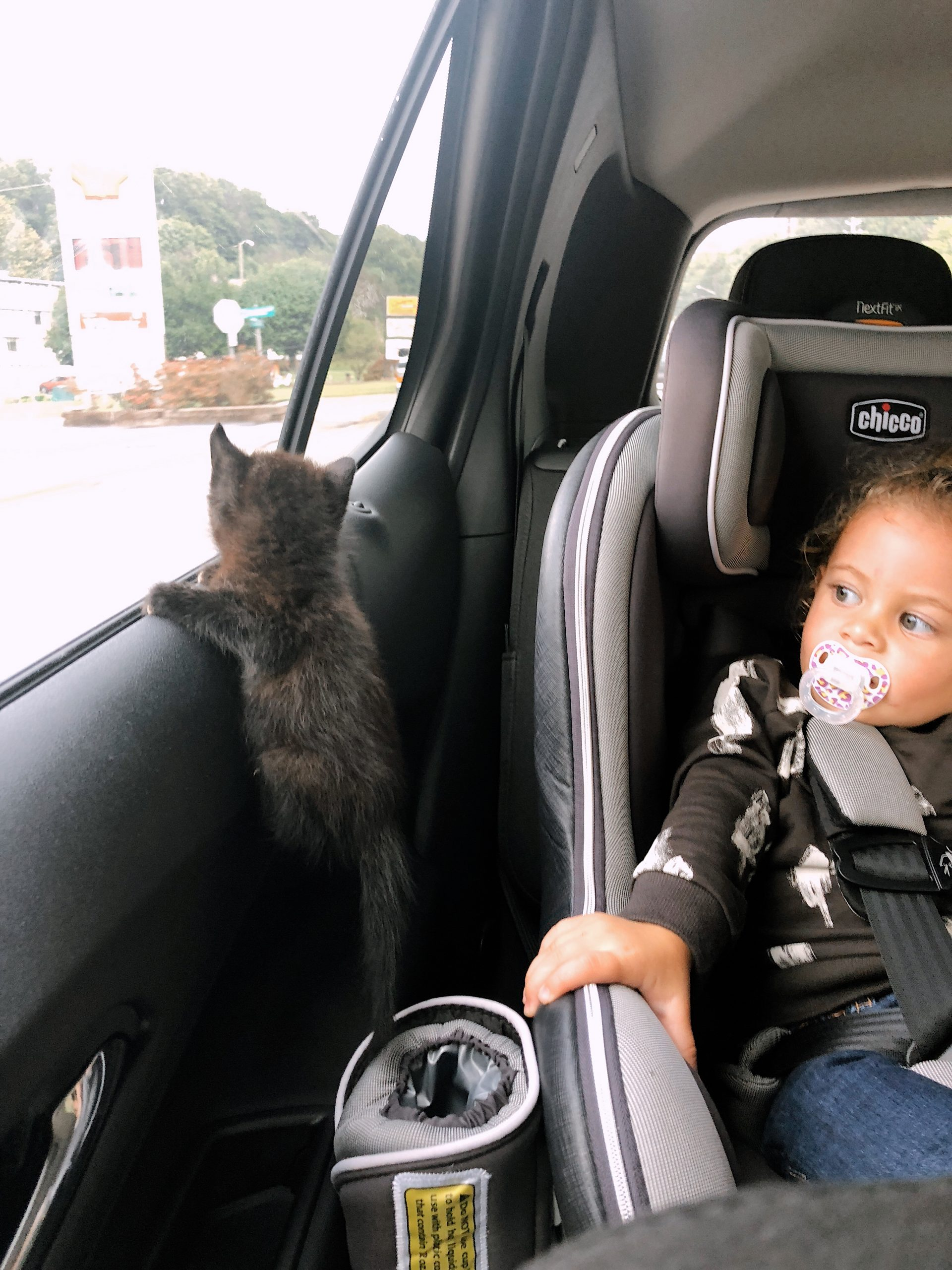 7 Spectacular Must-Know Tips for Raising a Healthy Cat - Our rescue kitten adoption story | Solid Gold by popular Florida lifestyle blog, Fresh Mommy Blog: image of black kitten next to a little girl in a her carseat.
